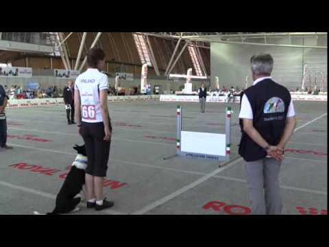 World Championship Obedience 2015 Final Riitta Kivimaki
