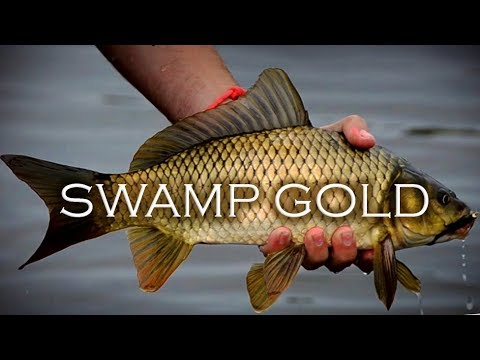 SWAMP GOLD: The Search for Big Muddy Bullion