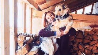 Фотограф переехала из Москвы в деревню и создала приют для собак