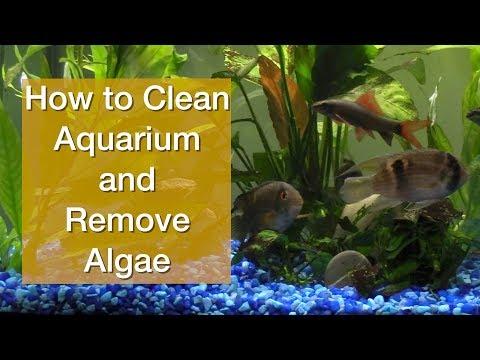 How to Clean Aquarium and Remove Algae