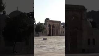 بعد إغلاق الاحتلال الاقصى و منع الصلاة فيه.. مفتي فلسطين يدعو الى التوجه للصلاة في الاقصى
