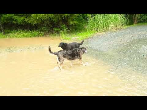 FLOODING IN UNION COUNTY NORTH CAROLINA : Check Out My Street