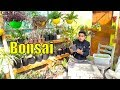 How To Grow Bonsai Shallow Roots mp3