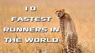 Top 10 Fastest Animals in the World: Fastest Runners in the Animal Kingdom  FreeSchool