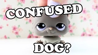 confused puppies compilation