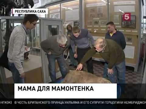 DV – медиапроект ТАСС про российский Дальний Восток