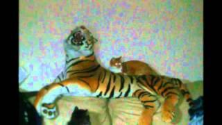 Чем занимается ночью кошка пока хозяева спят. What do cat do at night while her owners sleep..