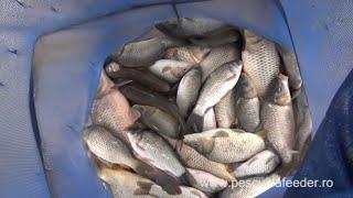 Pescuit la crap si caras in sezonul rece cu method feeder