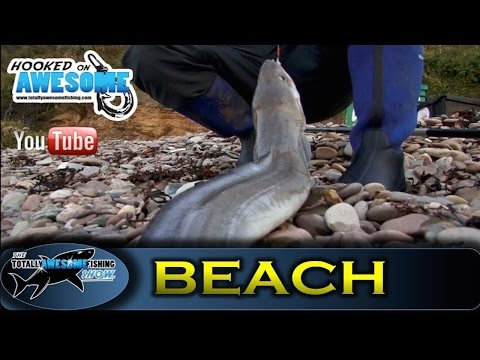 Shore fishing for BEGINNERS - Cod and Conger Eels - TAFishing Show