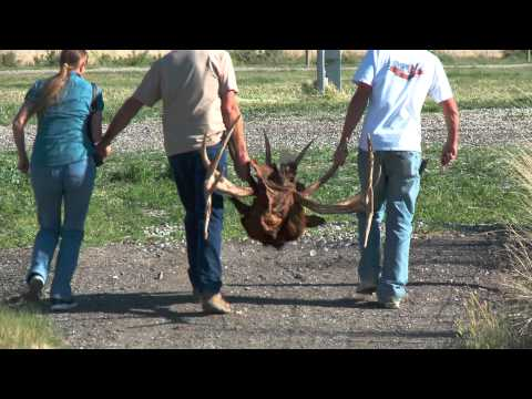 UDWR Antler Auction