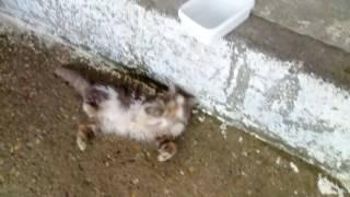 Sahiplendiğim kedi yumak