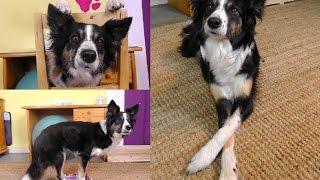 3 Hundetricks in 3 Minuten lernen || Tricktutorial