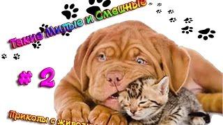 Прикольные животные. Такие милые и смешные # 2