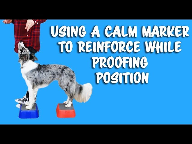 Using calm markers to teach precision in heelwork - Dog Training by Kikopup