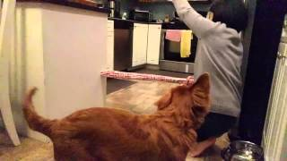 Huawei Nexus 6P High Speed Video (Slow Motion) Test - Siaycho Jump(Our dog Siaycho (a Nova Scotia Duck Tolling Retriever) was doing a bit of jumping in the kitchen, and I figured it would be a good way to test the high speed ..., 2016-01-19T05:35:27.000Z)