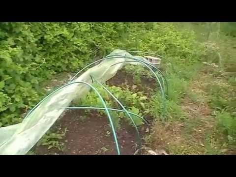 Jardin bio facile r sultats planche semis - Creer jardin japonais facile ...