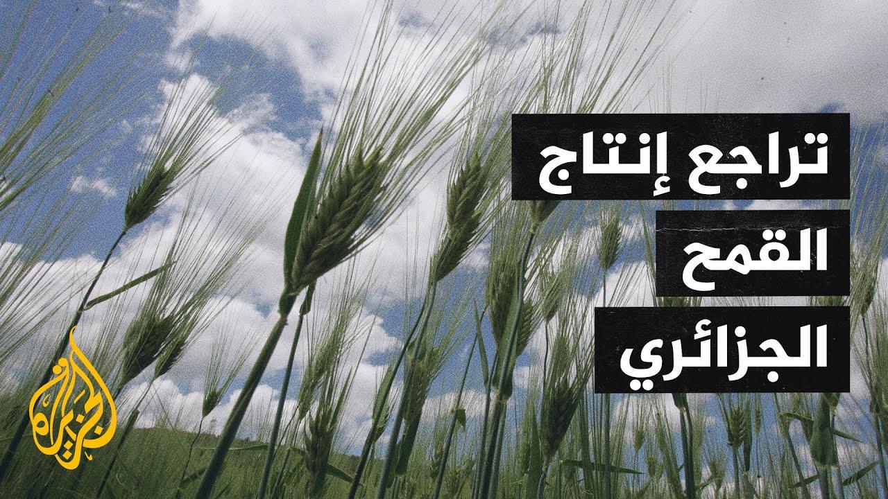 شح الأمطار يؤثر سلبا على موسم إنتاج القمح الجزائري  - 18:58-2021 / 5 / 8