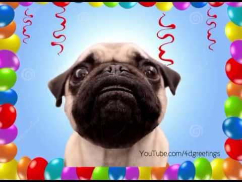 Happy Birthday Pug Funniest Birthday Song Youtube