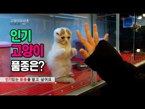 [ 고양이외삼촌 ] 인기 고양이 품종은?? _ Popula