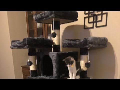 Most amazing cat tree!