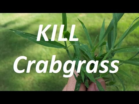 THE CRABGRASS CONTROL VIDEO -  Pre and Post Emergent