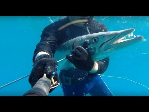 Spearfishing big BARRACUDA 20 kg. Подводная охота барракуда 20 кг.