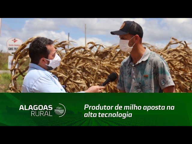 Produtor de milho aposta na alta tecnologia para produzir o grão no sertão de Alagoas