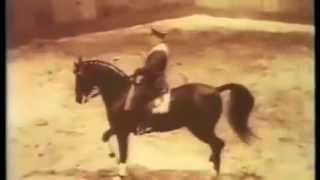 Абсент - сын Араба и Баккары (Absent Akhal-Teke)