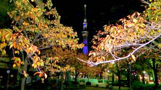 Tokyo Skytree Light up  2017 Oku-Asakusa Sanyabori Park excavation autumn leaves corridor 山谷堀紅葉回廊