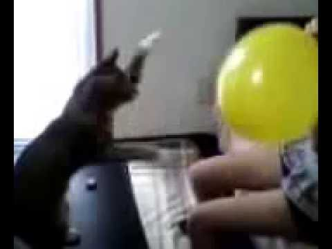 Balloon and cat punch