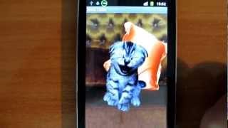 Котенок смеется на экране