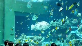 ちゅら海水族館。 さかなクンにも負けない面白いお魚トーク&クイズでし...