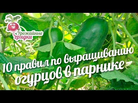 10 правил по выращиванию огурцов в парнике #urozhainye_gryadki