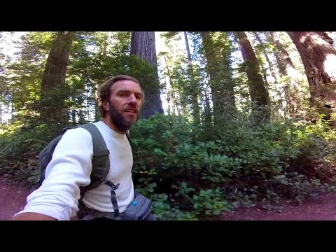 Hiking in the Redwoods: Beautiful Redwood National Park, California