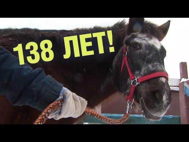 Самая старая лошадь России отметила 46-й день рождения. Это 138 лошадиных лет