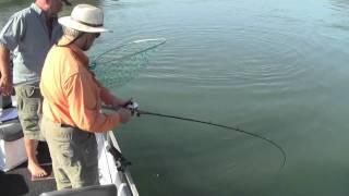 Sacramento River Salmon 2011.m4v