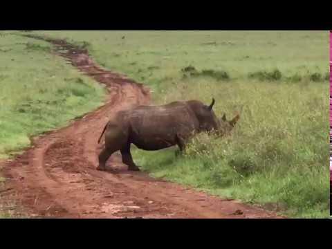Nairobi National Park: White Rhino Family
