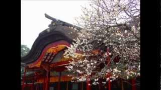 当地の岳風会ではこれが入門者がまず教わる定番中の定番です。春です。...