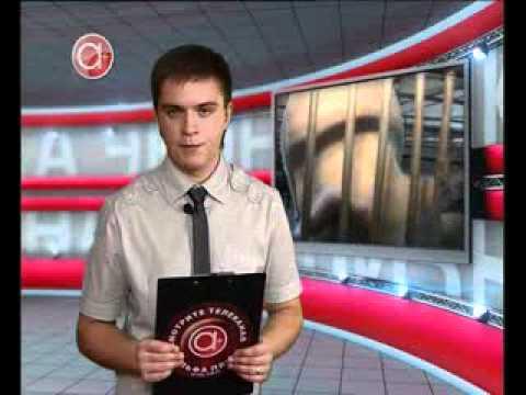 Болеют ли свиньи туберкулезом