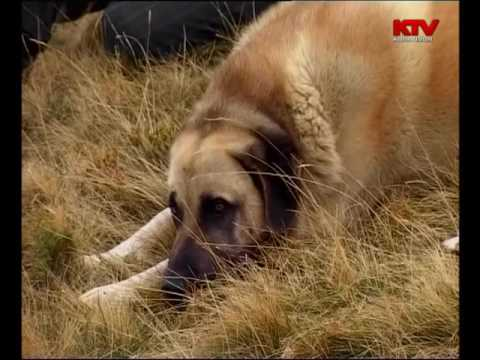 Best of Fauna Jonë Dhjetor 2007