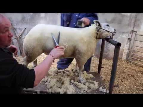 Lamb Dressing