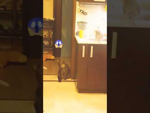 Приколы с котами Приколы с котятами Приколы с кошками Смешные коты и кошки Смешные коты и кошки