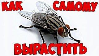видео Чем питается муха