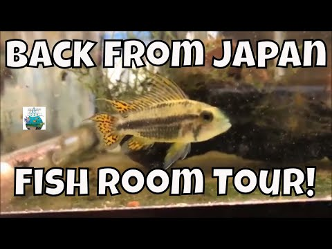 Back from Japan Around the World Fish Room Tour! Fancy Guppy Fish, Aquarium Fish Room VLOG