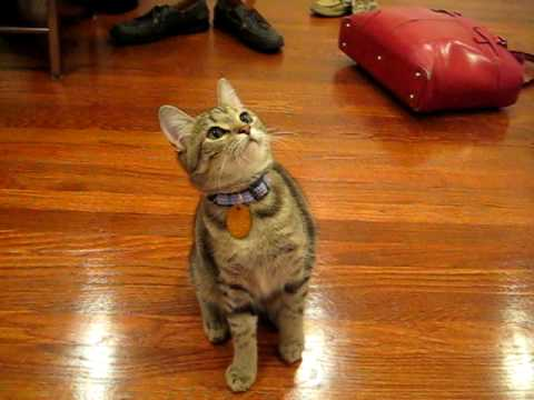 Kitten Tricks