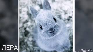 какой твой кролик по имени