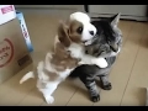 video di cani e gatti divertenti e teneri 26 youtube