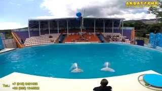 """Театр морских животных """"Акватория"""" (Ялта): Белый кит Проша и океанская волна"""