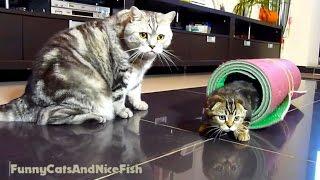 The Mega Tricks Cats team : Kittens  Neo, Neko and Cat Tyson