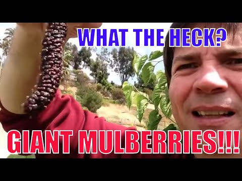 Growing Fruit Trees at Home in Your Front Yard - YouTube